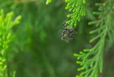 Mrówka na gałąź Zdjęcie Stock