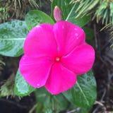 Mrówka na kwiacie obrazy royalty free