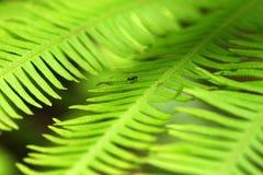 Mrówka na zielonych liściach Zdjęcie Stock