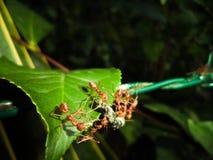 Mrówka pracujący czas fotografia stock