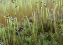 Mrówka w drewnie Fotografia Stock