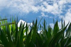 Mrówka widok, niebieskie niebo i biel chmury na pięknym dniu, i opróżniamy astronautycznego teksta lub drzewa przedpole z ścinek  obraz stock