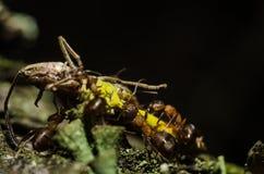 Mrówka, zwierzęta, makro-, insekt, członkonóg, natura, bezkręgowiec obrazy royalty free