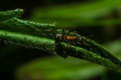 Mrówka, zwierzęta, makro-, insekt, członkonóg, natura, bezkręgowiec obraz royalty free
