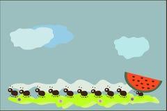 mrówki Fotografia Stock