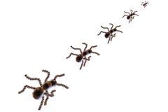mrówki. Obraz Royalty Free