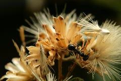 mrówki Zdjęcia Stock