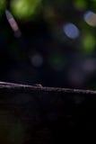 Mrówki Zdjęcie Stock