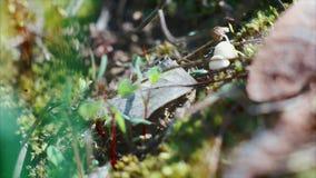 Mrówki biegać dalej zdjęcie wideo