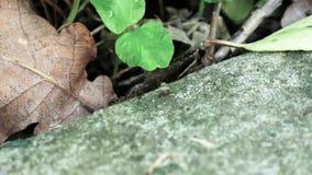 Mrówki biega zakończenie w górę makro- zdjęcie wideo
