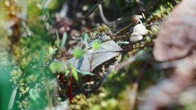 Mrówki biegają daleko od zbiory wideo