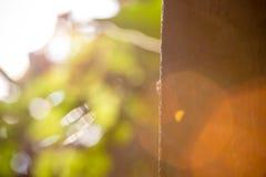 Mrówki chodzą na drzewie Obraz Royalty Free