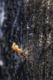 Mrówki dźwignięcie wielki jedzenie Obrazy Stock