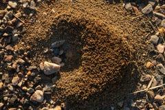 Mrówki gniazdeczko na żwirze fotografia royalty free
