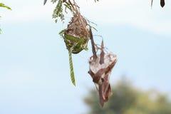 Mrówki gniazdeczko robić opuszcza łączyć wpólnie zieleń fotografia royalty free