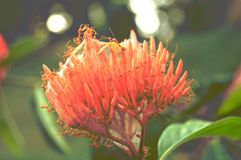 Mrówki gniazdeczko w kwiat natury cudu tapety fotografii obraz royalty free