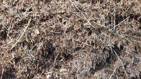 Mrówki gniazdują z kolonią mrówki w zielonym wiosna lesie zbiory wideo