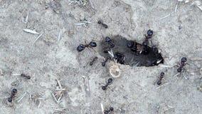 Mrówki iść w i out mlejąca dziura zbiory