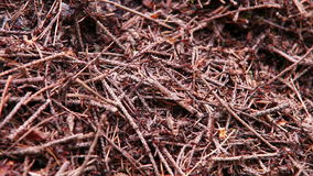 Mrówki kolonia w lesie - anthill tło zdjęcie wideo