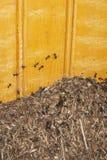 mrówki mieścą najeżdżanie starego zdjęcie stock