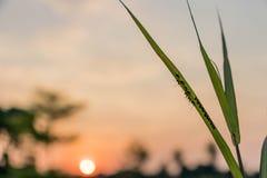 Mrówki na trawie, jasnozielona trawa, słońca tło fotografia royalty free