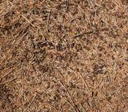 Mrówki na ziemi Zdjęcia Stock