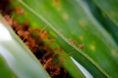 Mrówki przyroda na rośliny teksturze Zdjęcia Royalty Free