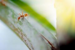 Mrówki przyroda na rośliny teksturze Zdjęcie Royalty Free