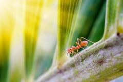 Mrówki przyroda na rośliny teksturze Obrazy Royalty Free
