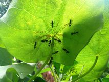 Mrówki schronienie zdjęcia stock