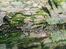 Mrówki w dżungli obraz royalty free