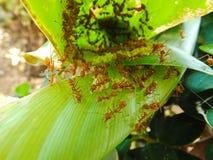 Mrówki w gniazdeczku Obrazy Royalty Free