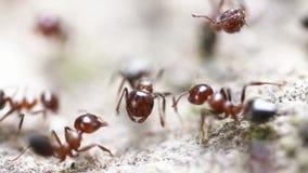 Mrówki w naturze zdjęcie wideo