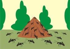 mrówki wzgórze Obrazy Stock