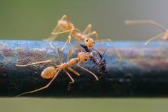 Mrówki życie Zdjęcia Royalty Free