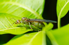 mrówki zielona natury królowa Obrazy Royalty Free