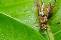 mrówki zielona natury królowa Obrazy Stock