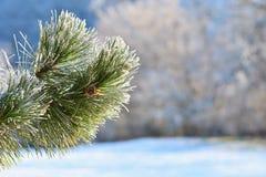 Mróz i śnieg na gałąź Pięknej zimy sezonowy tło Fotografia zamarznięta natura Zdjęcie Royalty Free