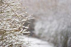 Mróz i śnieg na gałąź Pięknej zimy sezonowy tło Fotografia zamarznięta natura Zdjęcia Stock
