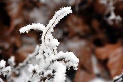 Mróz i śnieg Obraz Stock