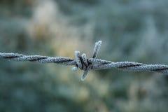 Mróz na drucie kolczastym Fotografia Royalty Free
