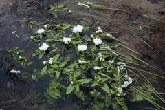 Mróz na liściach strumień rośliny obrazy royalty free