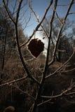 Mróz na liściach Zdjęcia Stock