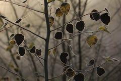 Mróz na liściach Obrazy Stock