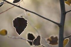 Mróz na liściach Zdjęcie Stock
