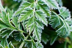 Mróz na trawa liściach Obraz Stock