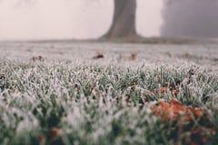 mróz na trawie i liściach na zimnym mgłowym zima ranku w Londyn, UK obraz stock