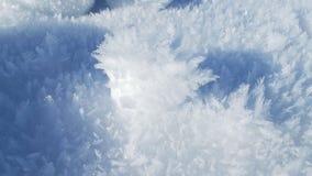 Mróz w śniegu Fotografia Royalty Free