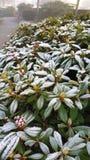 Mróz w roślinie Zdjęcie Royalty Free