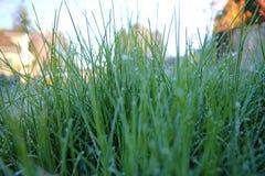 Mróz zakończona trawa zdjęcie royalty free